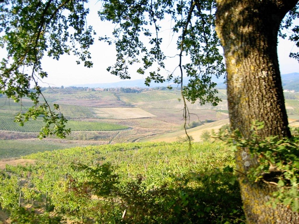 Vineyards Sienna Tuscany
